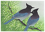 Click here for more information about Steller's Jays holiday card set
